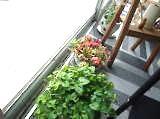 院内緑写真